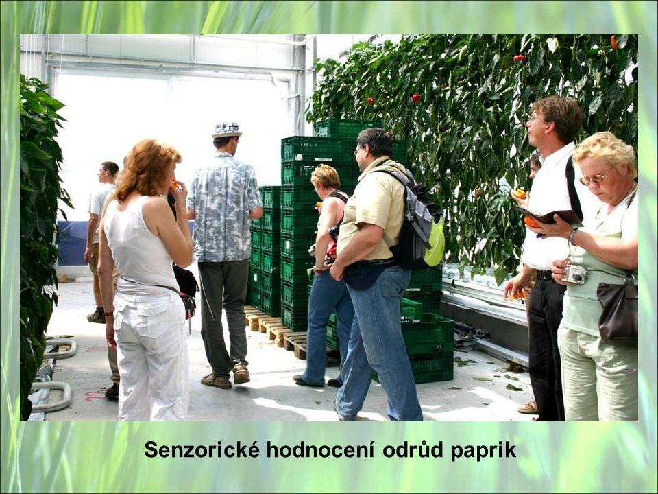 Senzorické hodnocení odrůd paprik