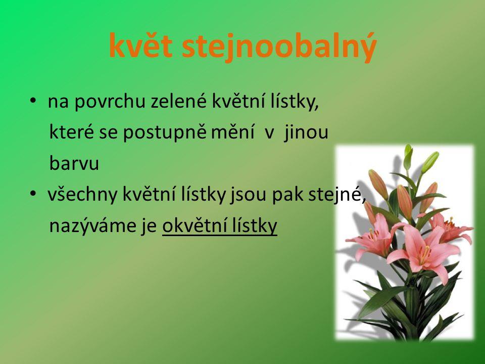 květ stejnoobalný na povrchu zelené květní lístky, které se postupně mění v jinou barvu všechny květní lístky jsou pak stejné, nazýváme je okvětní lístky