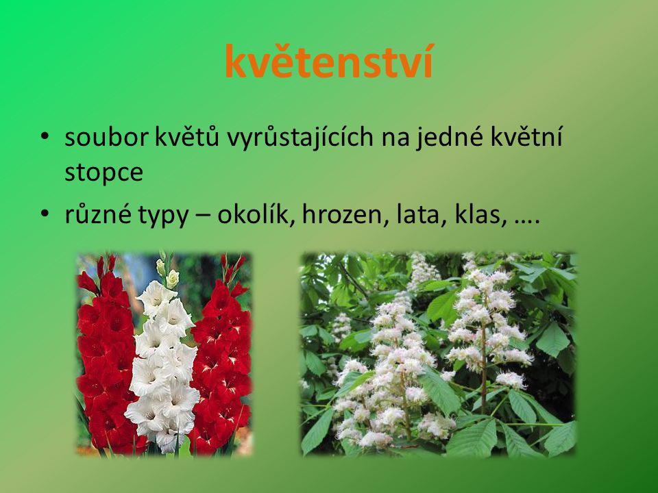 květenství soubor květů vyrůstajících na jedné květní stopce různé typy – okolík, hrozen, lata, klas, ….