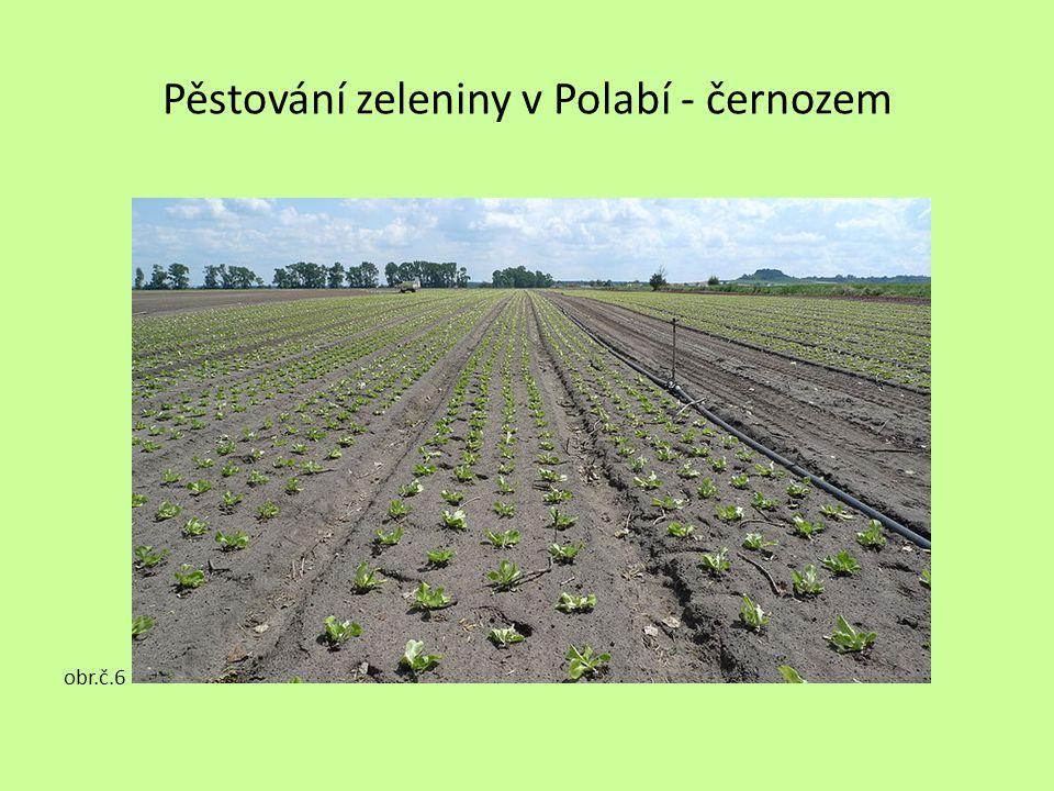 Pěstování zeleniny v Polabí - černozem obr.č.6