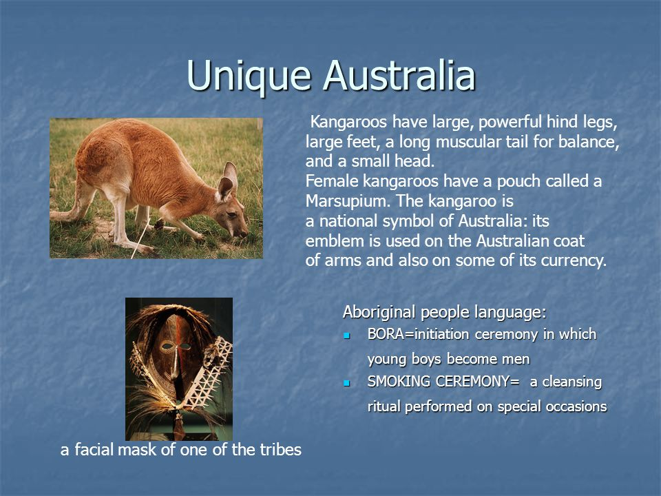 Unique Australia Aboriginal people language: BORA=initiation ceremony in which young boys become men BORA=initiation ceremony in which young boys become men SMOKING CEREMONY= a cleansing ritual performed on special occasions SMOKING CEREMONY= a cleansing ritual performed on special occasions Kangaroos have large, powerful hind legs, large feet, a long muscular tail for balance, and a small head.