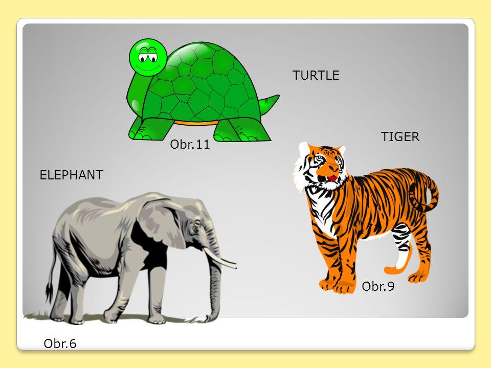 Obr.6 ELEPHANT Obr.9 TIGER Obr.11 TURTLE