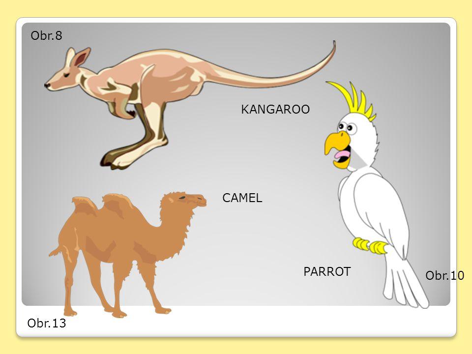 Obr.8 KANGAROO Obr.10 PARROT Obr.13 CAMEL
