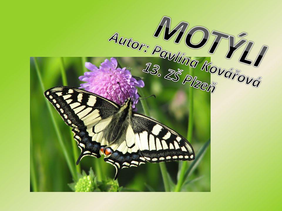 výskyt po celém světě 180 000 druhů potrava - šťáva z květů potrava housenek - rostliny užiteční, někteří - škůdci ZÁKLADNÍ INFORMACE