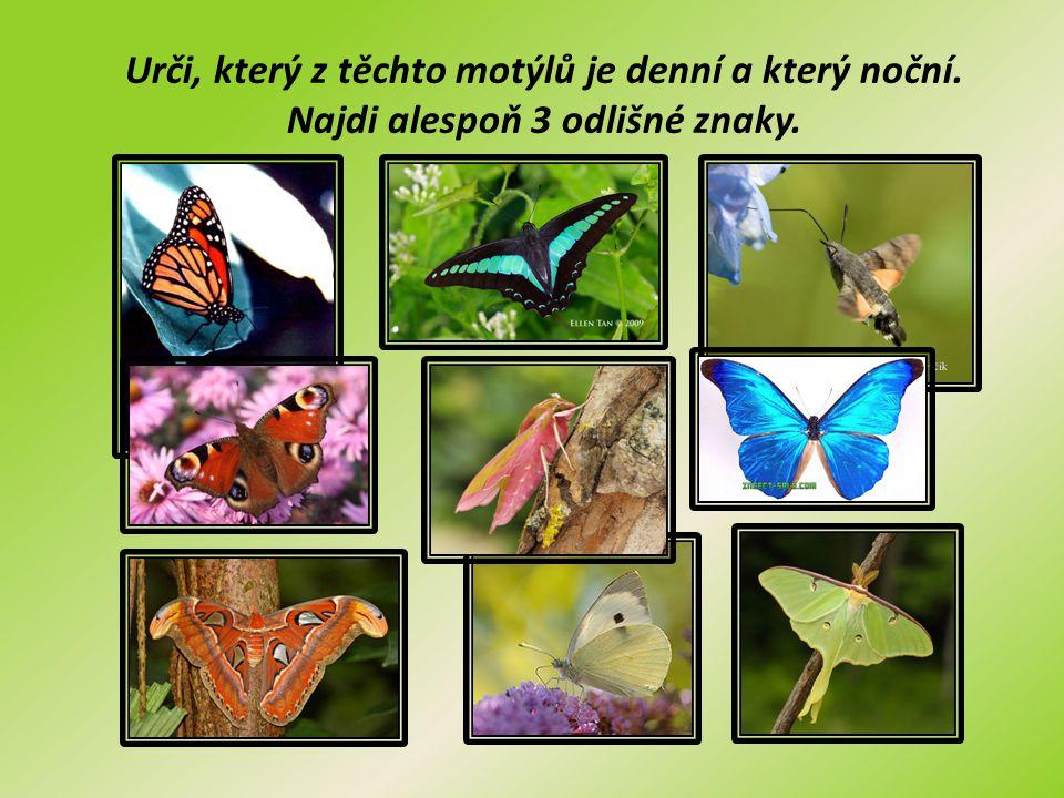 Urči, který z těchto motýlů je denní a který noční. Najdi alespoň 3 odlišné znaky.