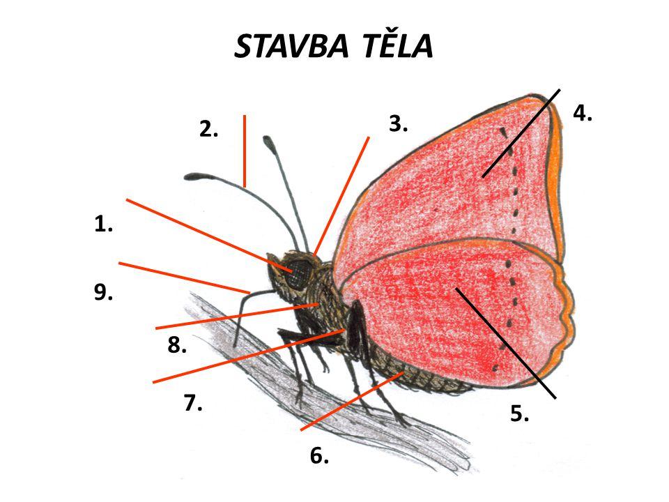 STAVBA TĚLA 5. 1. 2. 3. 4. 6. 7. 8. 9.