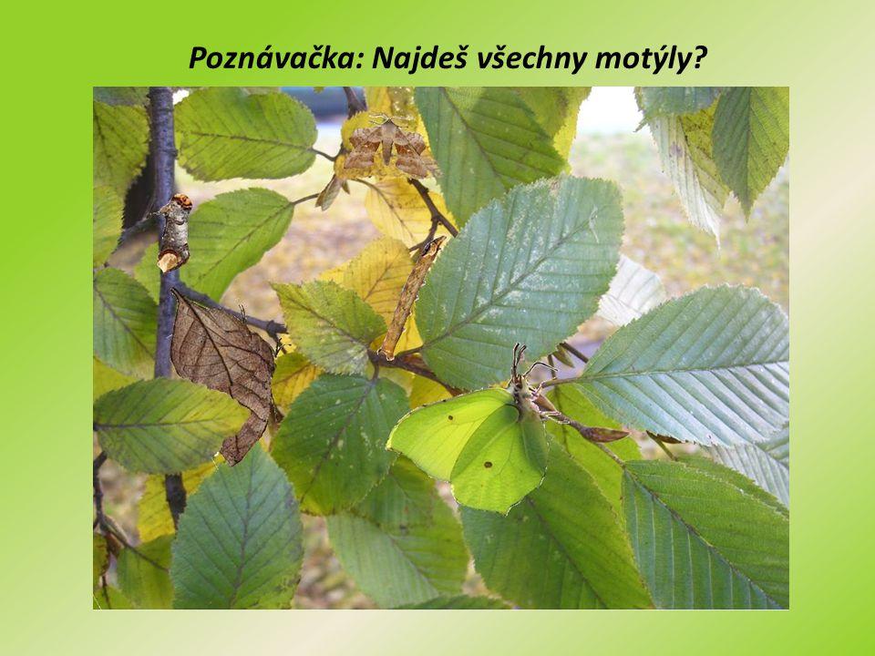 Poznávačka: Najdeš všechny motýly?