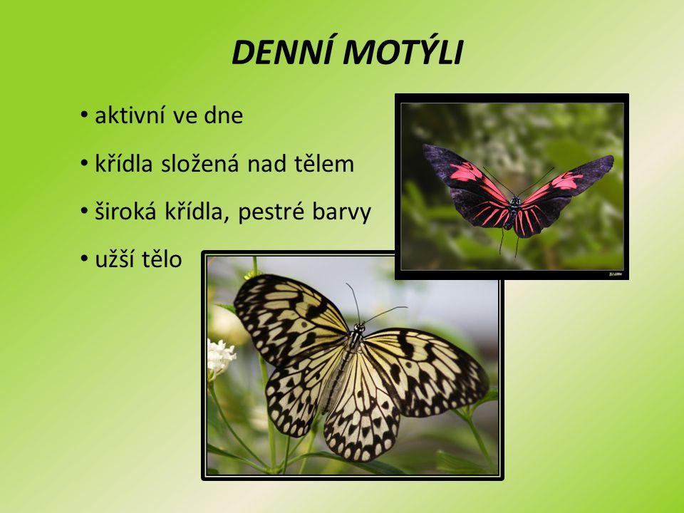DENNÍ MOTÝLI aktivní ve dne křídla složená nad tělem široká křídla, pestré barvy užší tělo