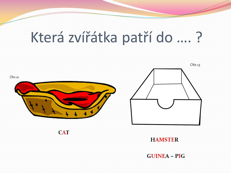 Která zvířátka patří do …. ? Obr.12 CATCAT Obr.13 HAMSTER GUINEA – PIG