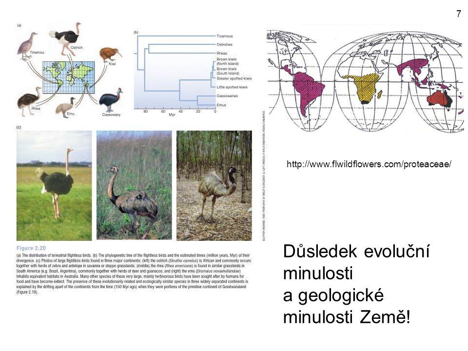http://www.flwildflowers.com/proteaceae/ Důsledek evoluční minulosti a geologické minulosti Země! 7