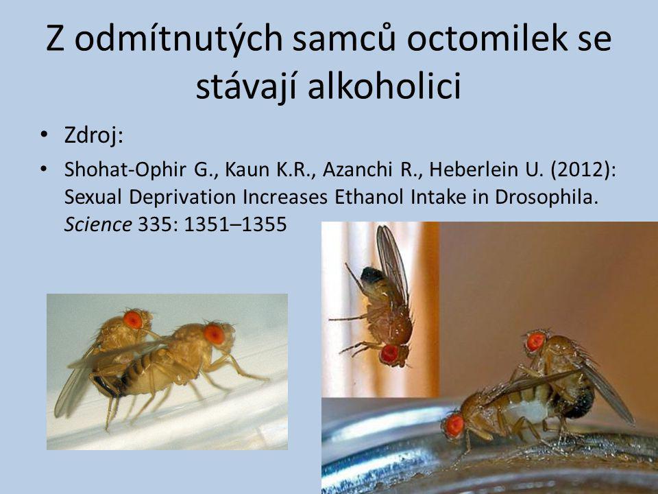 Z odmítnutých samců octomilek se stávají alkoholici Zdroj: Shohat-Ophir G., Kaun K.R., Azanchi R., Heberlein U. (2012): Sexual Deprivation Increases E