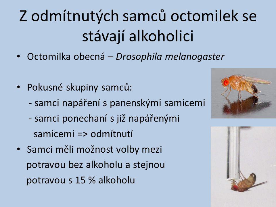 Z odmítnutých samců octomilek se stávají alkoholici Octomilka obecná – Drosophila melanogaster Pokusné skupiny samců: - samci napáření s panenskými samicemi - samci ponechaní s již napářenými samicemi => odmítnutí Samci měli možnost volby mezi potravou bez alkoholu a stejnou potravou s 15 % alkoholu