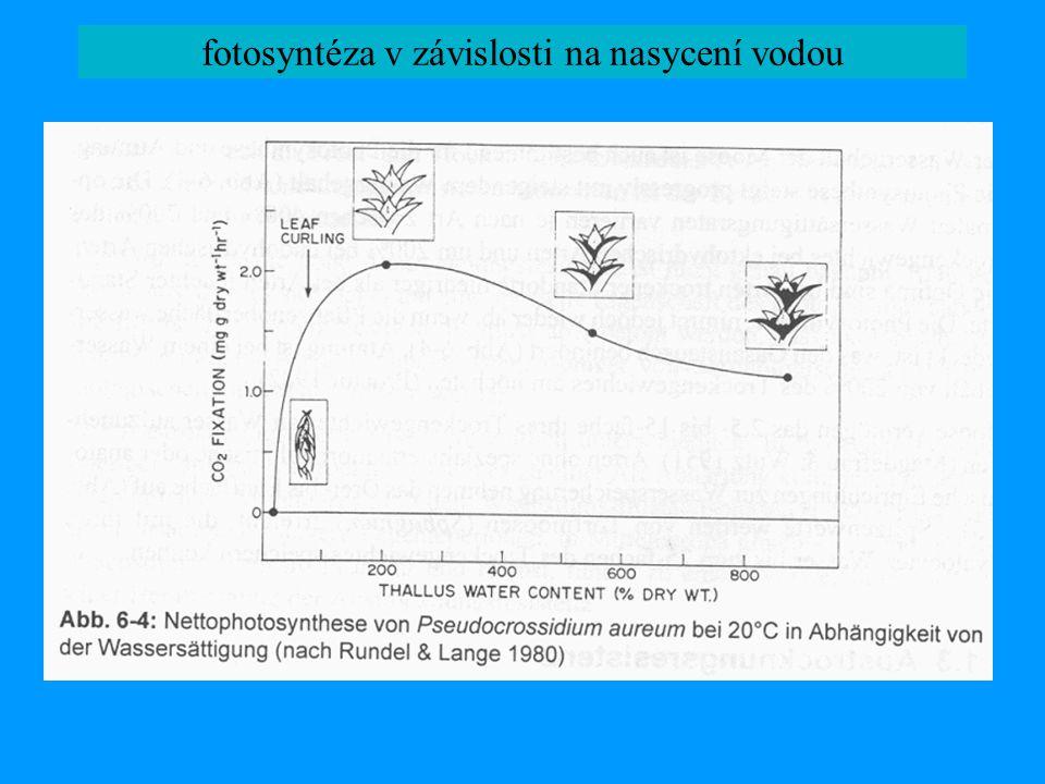 fotosyntéza v závislosti na nasycení vodou