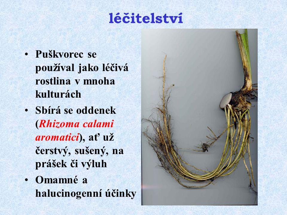 léčitelství Puškvorec se používal jako léčivá rostlina v mnoha kulturách Sbírá se oddenek (Rhizoma calami aromatici), ať už čerstvý, sušený, na prášek