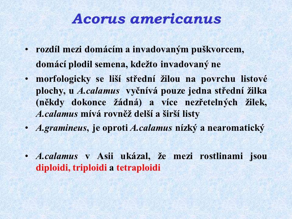 Acorus americanus rozdíl mezi domácím a invadovaným puškvorcem, domácí plodil semena, kdežto invadovaný ne morfologicky se liší střední žilou na povrc