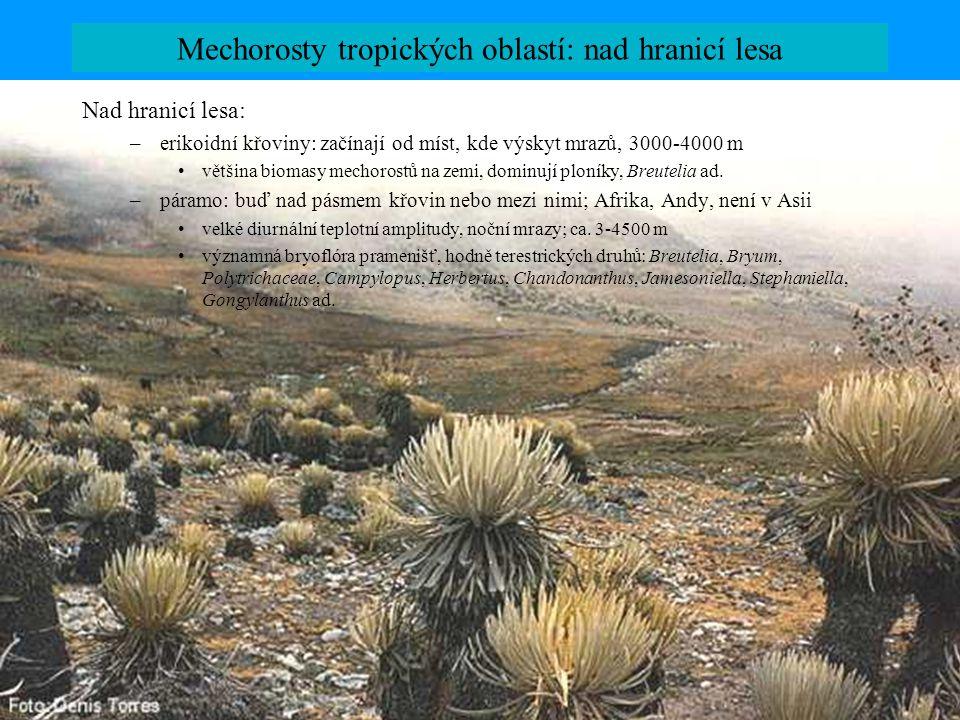 Mechorosty tropických oblastí: nad hranicí lesa Nad hranicí lesa: –erikoidní křoviny: začínají od míst, kde výskyt mrazů, 3000-4000 m většina biomasy mechorostů na zemi, dominují ploníky, Breutelia ad.