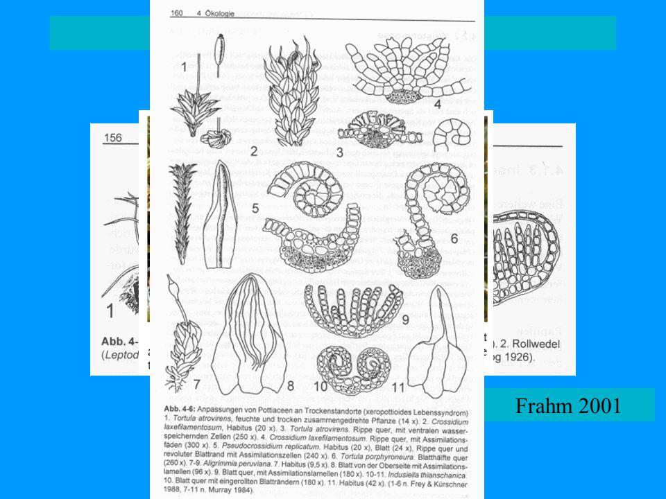 adaptace na aridní podmínky Frahm 2001