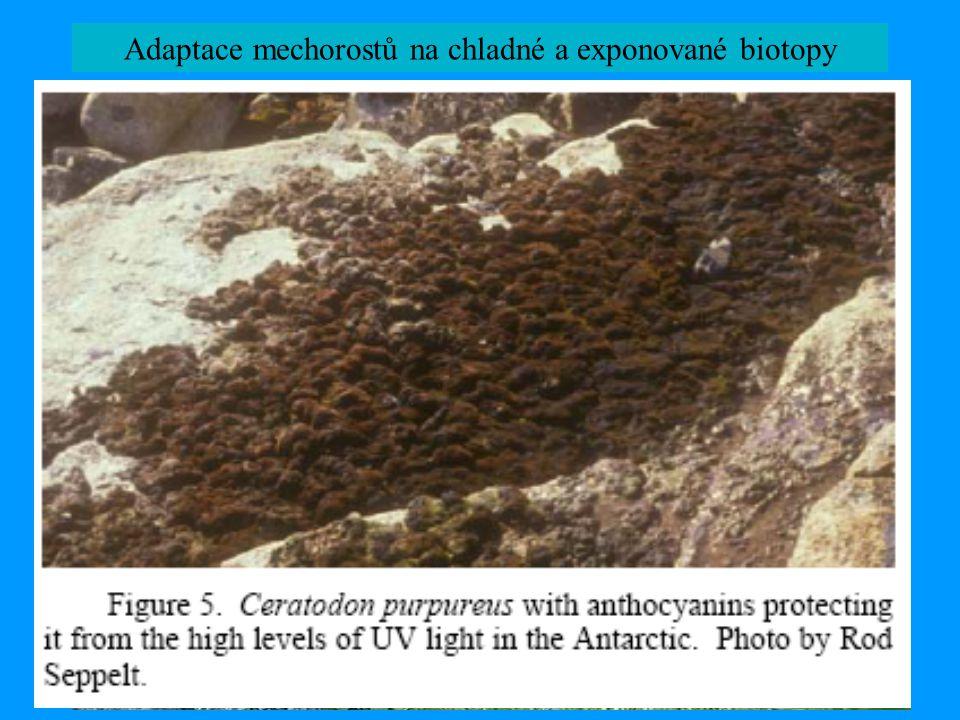 Oreas martiana, © M. Lüth Adaptace mechorostů na chladné a exponované biotopy