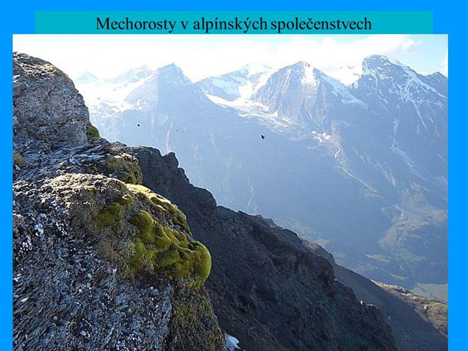 Mechorosty v alpínských společenstvech alpínská vegetace na sev. polokouli – floristická příbuznost a přímý kontakt s arktickou veg. během ledových do