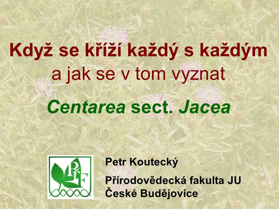 Když se kříží každý s každým a jak se v tom vyznat Centarea sect. Jacea Petr Koutecký Přírodovědecká fakulta JU České Budějovice