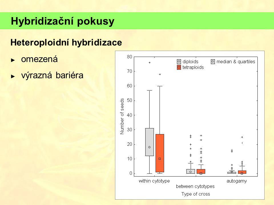 Hybridizační pokusy Heteroploidní hybridizace ► omezená ► výrazná bariéra