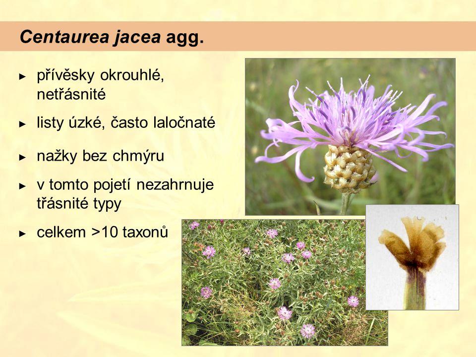 Centaurea jacea agg. ► přívěsky okrouhlé, netřásnité ► listy úzké, často laločnaté ► nažky bez chmýru ► v tomto pojetí nezahrnuje třásnité typy ► celk