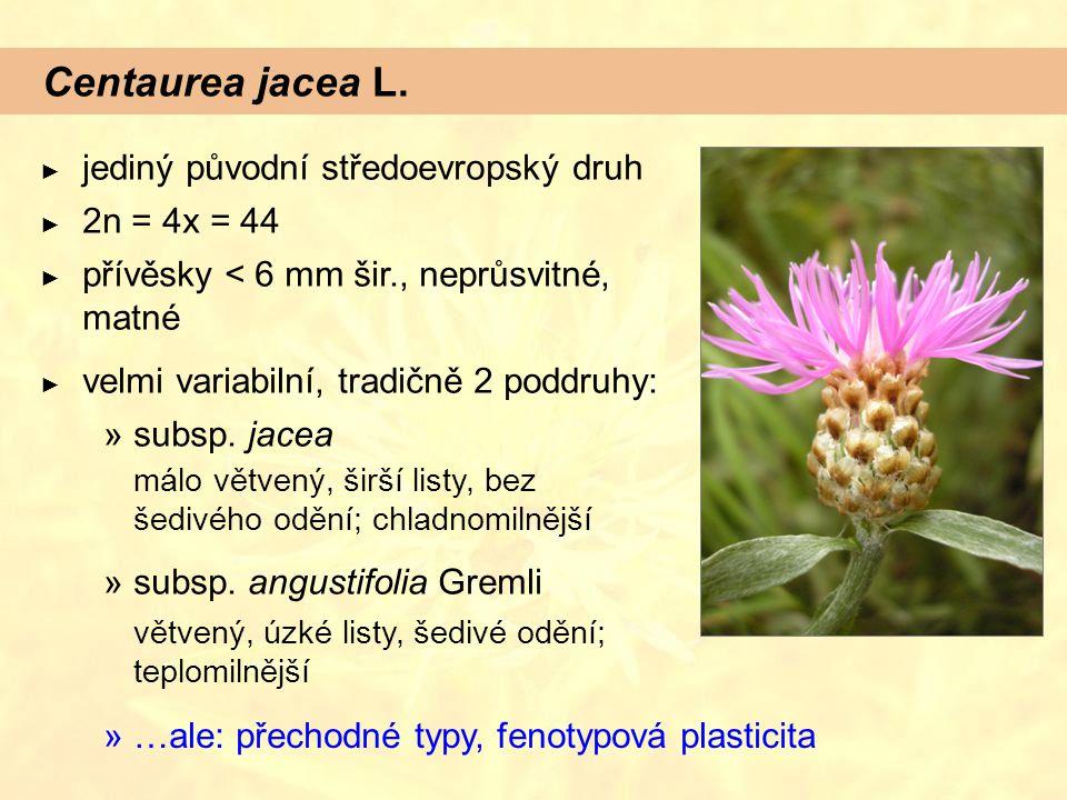 Centaurea jacea L. ► jediný původní středoevropský druh ► 2n = 4x = 44 ► přívěsky < 6 mm šir., neprůsvitné, matné ► velmi variabilní, tradičně 2 poddr