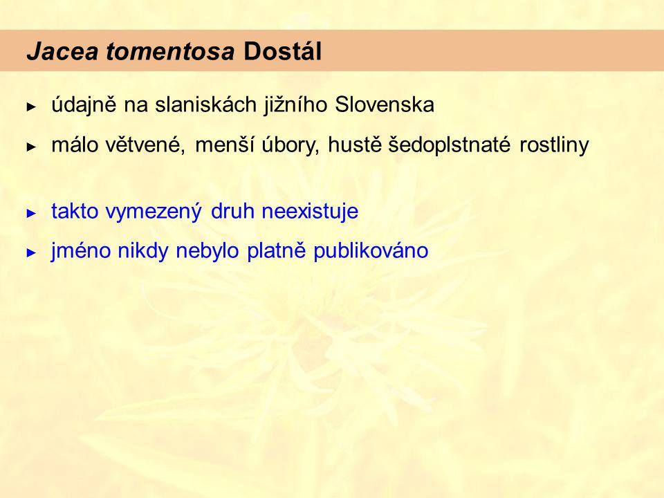 Jacea tomentosa Dostál ► údajně na slaniskách jižního Slovenska ► málo větvené, menší úbory, hustě šedoplstnaté rostliny ► takto vymezený druh neexistuje ► jméno nikdy nebylo platně publikováno