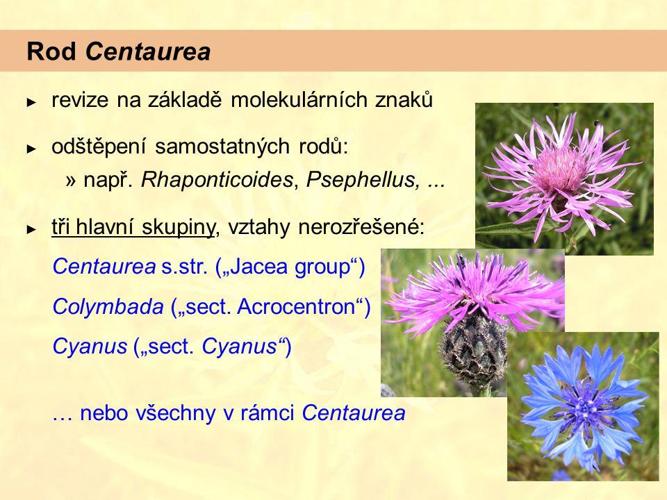 Rod Centaurea ► revize na základě molekulárních znaků ► odštěpení samostatných rodů:  např. Rhaponticoides, Psephellus,... ► tři hlavní skupiny, vzta