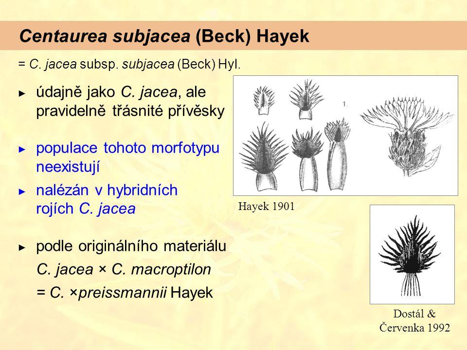 Centaurea subjacea (Beck) Hayek ► údajně jako C. jacea, ale pravidelně třásnité přívěsky ► populace tohoto morfotypu neexistují ► nalézán v hybridních