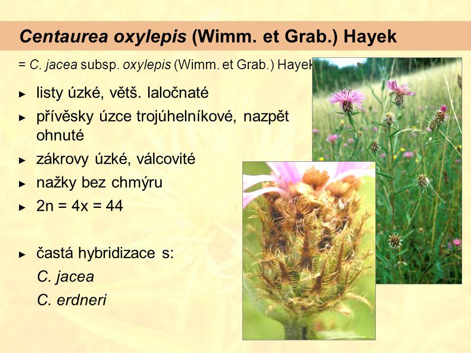 Centaurea oxylepis (Wimm. et Grab.) Hayek = C. jacea subsp. oxylepis (Wimm. et Grab.) Hayek ► listy úzké, větš. laločnaté ► přívěsky úzce trojúhelníko