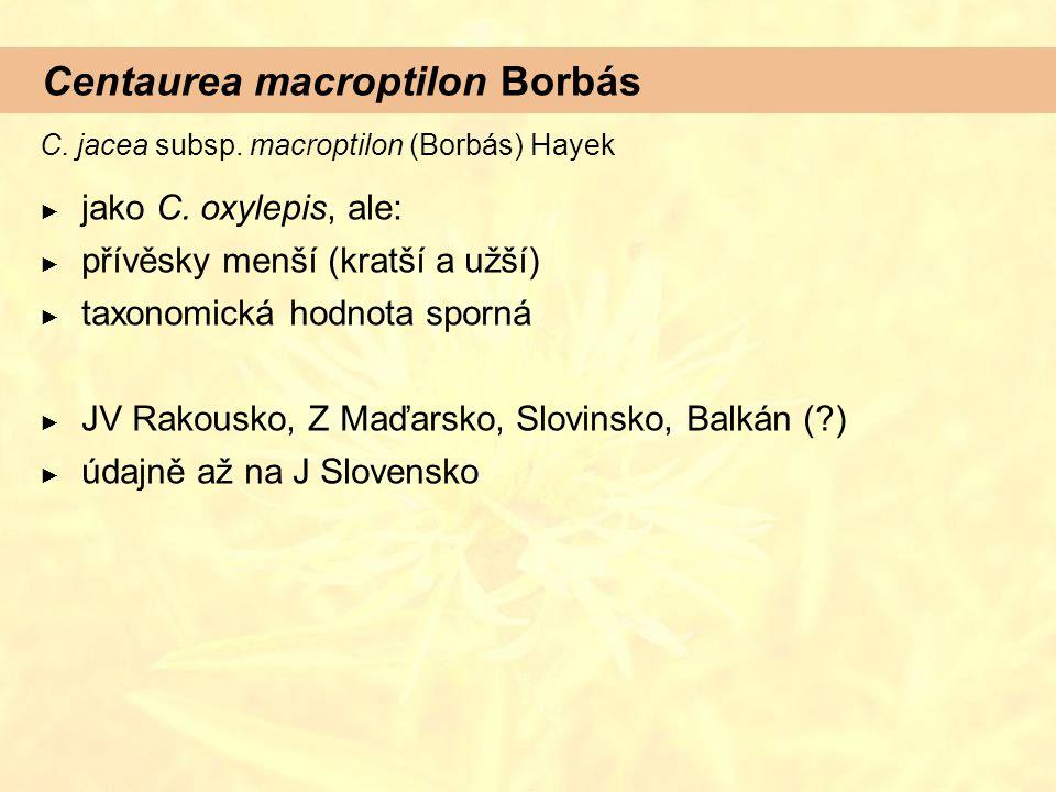 Centaurea macroptilon Borbás C. jacea subsp. macroptilon (Borbás) Hayek ► jako C. oxylepis, ale: ► přívěsky menší (kratší a užší) ► taxonomická hodnot