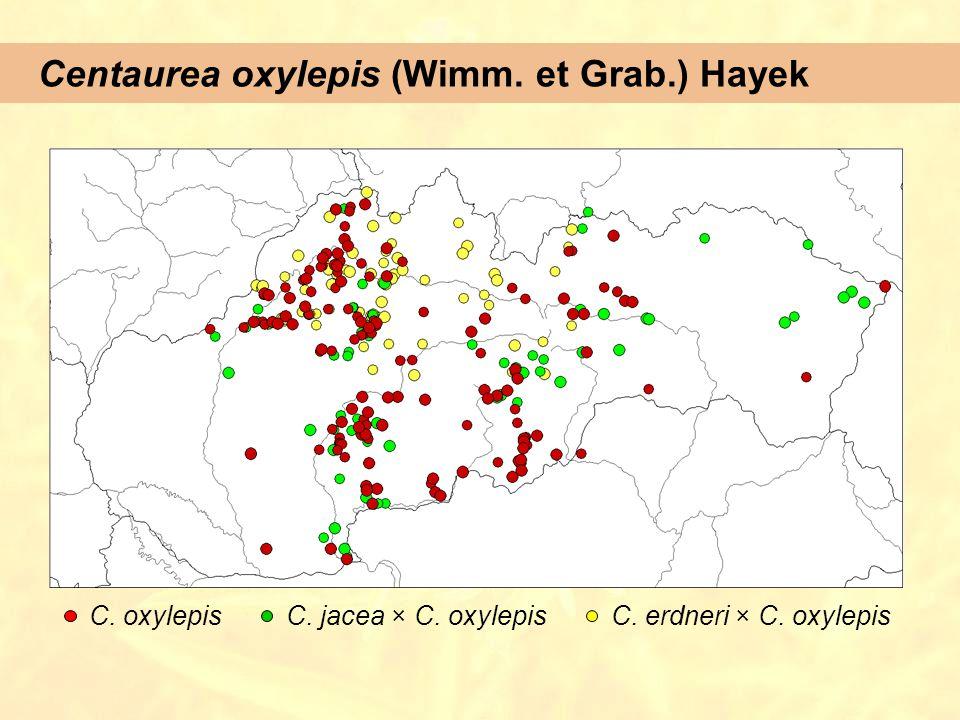 Centaurea oxylepis (Wimm. et Grab.) Hayek C. oxylepisC. jacea × C. oxylepisC. erdneri × C. oxylepis