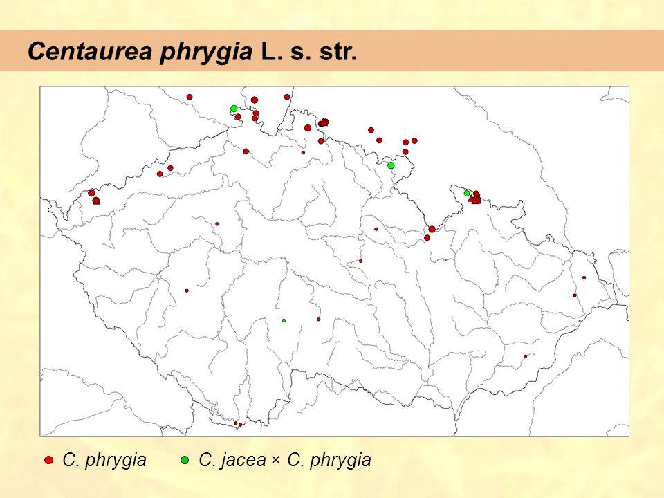 Centaurea phrygia L. s. str. C. phrygiaC. jacea × C. phrygia