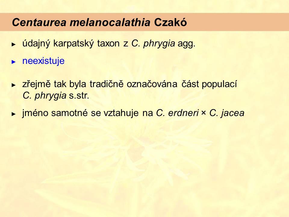 Centaurea melanocalathia Czakó ► údajný karpatský taxon z C. phrygia agg. ► neexistuje ► zřejmě tak byla tradičně označována část populací C. phrygia