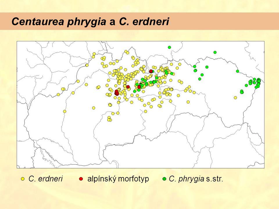 Centaurea phrygia a C. erdneri C. erdnerialpínský morfotypC. phrygia s.str.