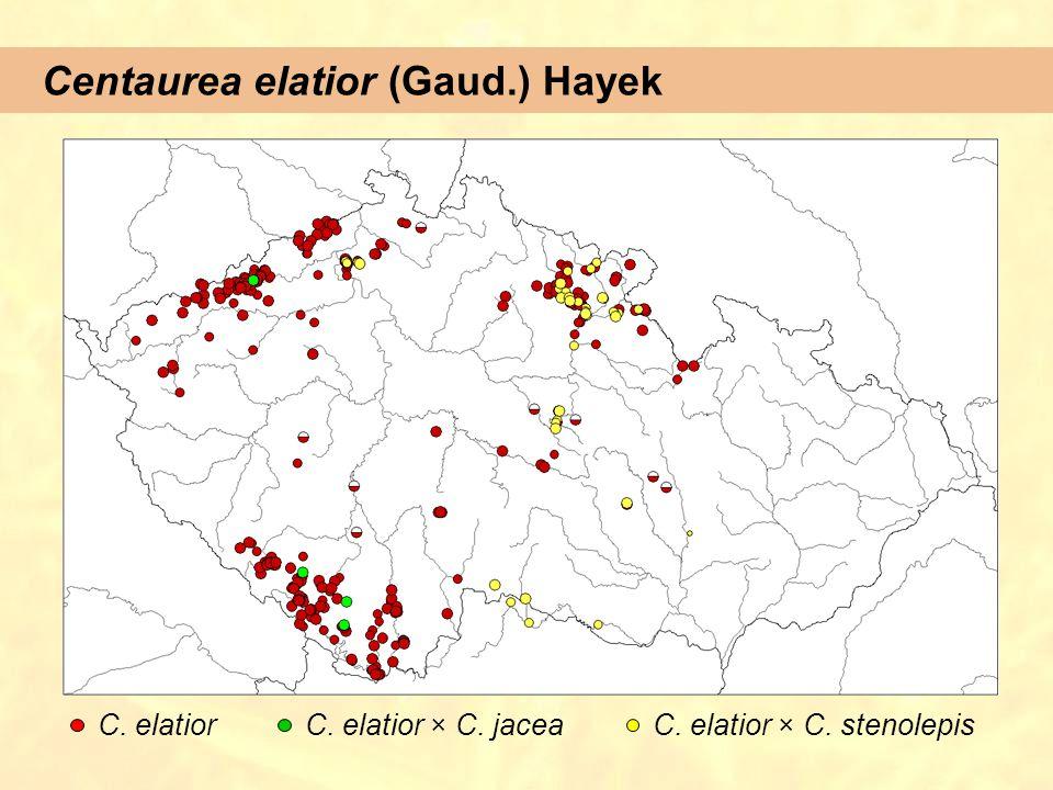 Centaurea elatior (Gaud.) Hayek C. elatiorC. elatior × C. jaceaC. elatior × C. stenolepis