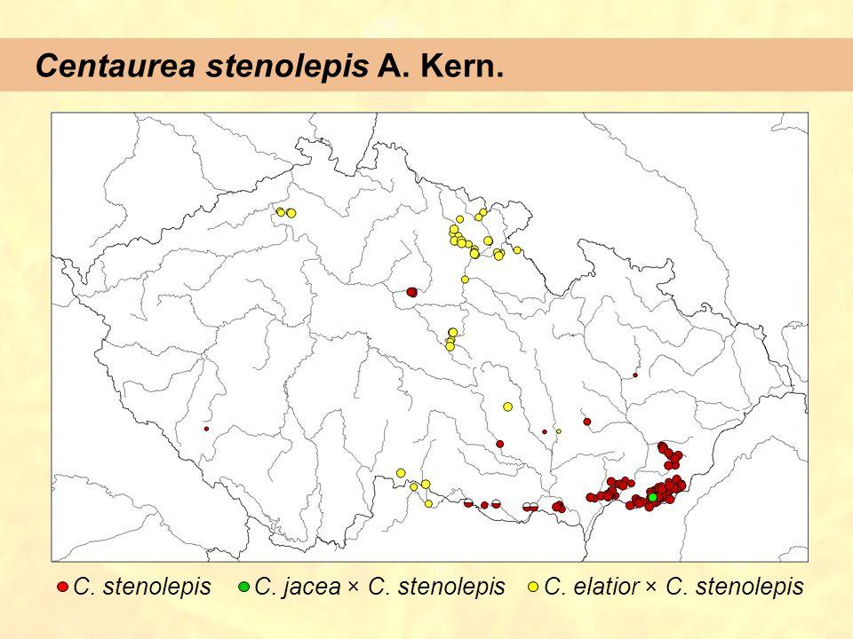 Centaurea stenolepis A. Kern. C. stenolepisC. jacea × C. stenolepisC. elatior × C. stenolepis