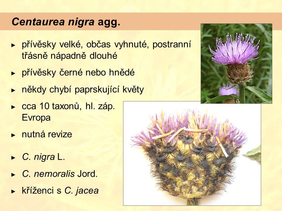 Centaurea nigra agg. ► přívěsky velké, občas vyhnuté, postranní třásně nápadně dlouhé ► přívěsky černé nebo hnědé ► někdy chybí paprskující květy ► cc