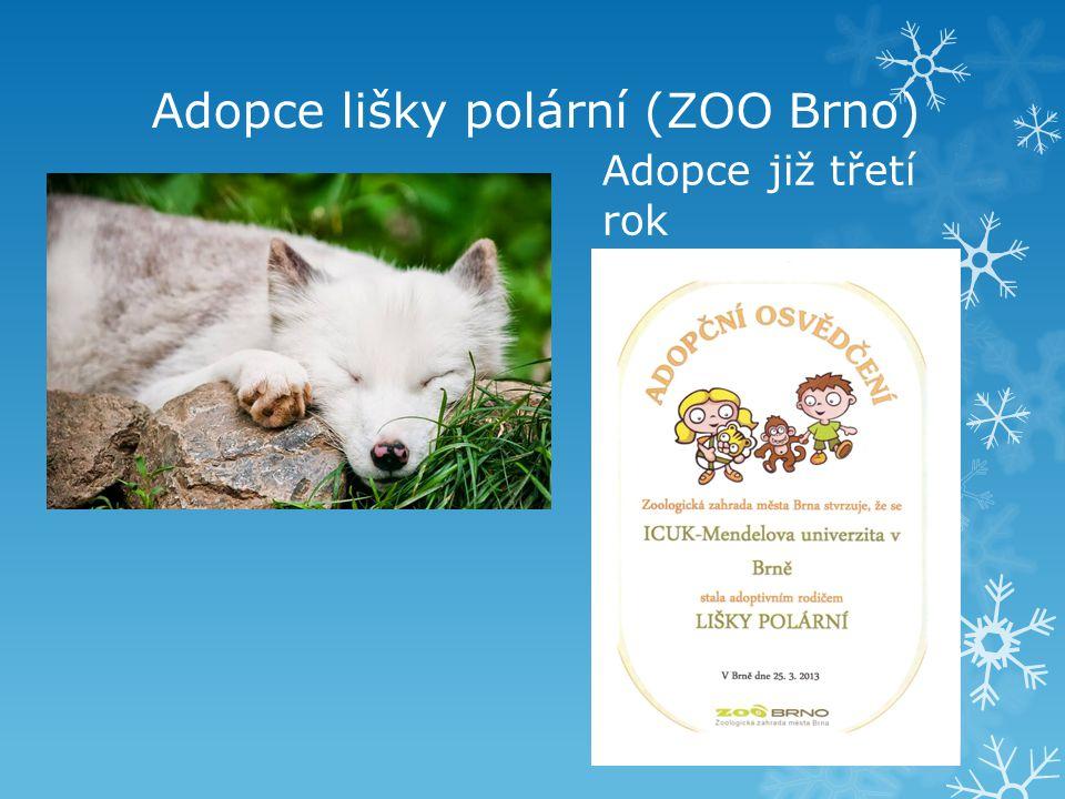 Adopce lišky polární (ZOO Brno) Adopce již třetí rok