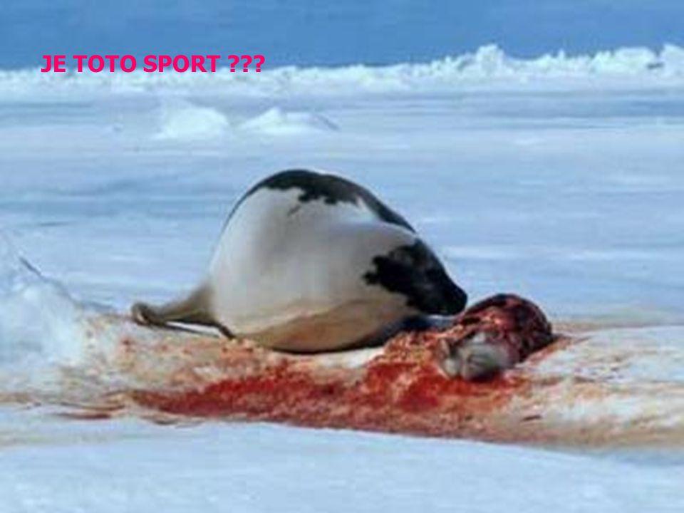 Norsko zavádí novou podobu turismu, při kterém jsou k smrti ubíjena mláďata tuleňů. CANADA nás zabíjí taky...