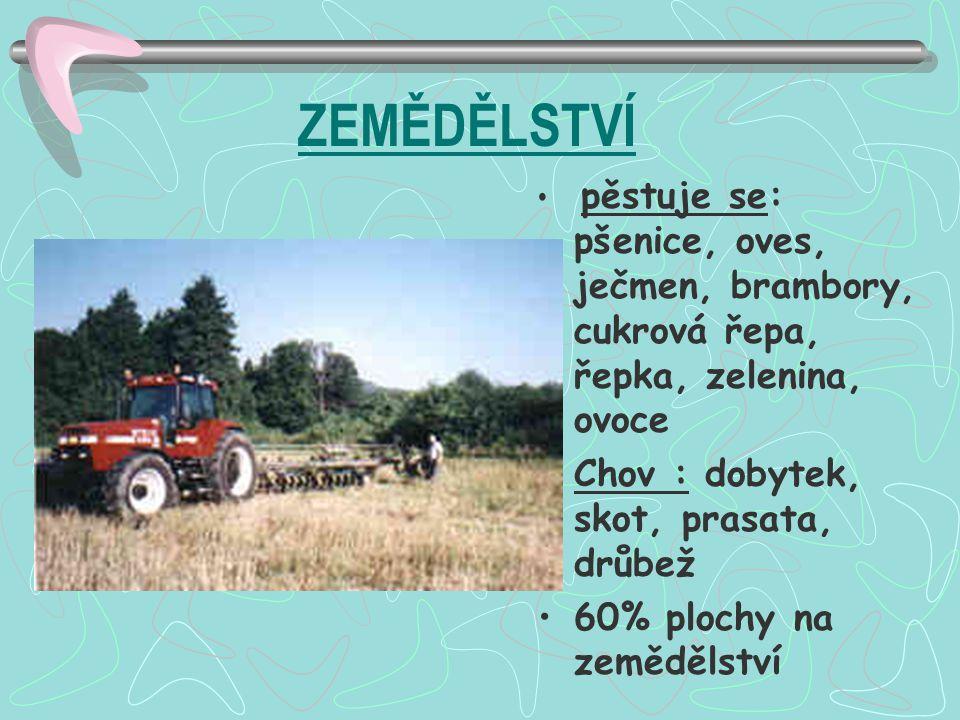 ZEMĚDĚLSTVÍ pěstuje se: pšenice, oves, ječmen, brambory, cukrová řepa, řepka, zelenina, ovoce Chov : dobytek, skot, prasata, drůbež 60% plochy na země