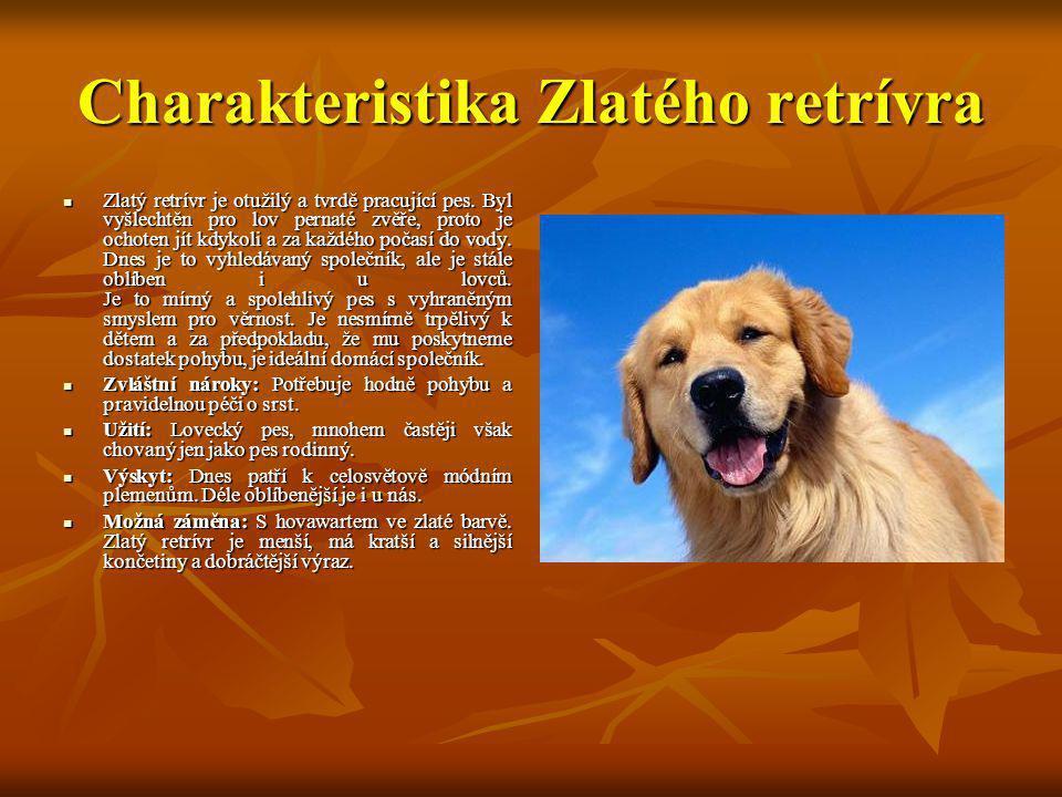 Charakteristika Zlatého retrívra Zlatý retrívr je otužilý a tvrdě pracující pes. Byl vyšlechtěn pro lov pernaté zvěře, proto je ochoten jít kdykoli a