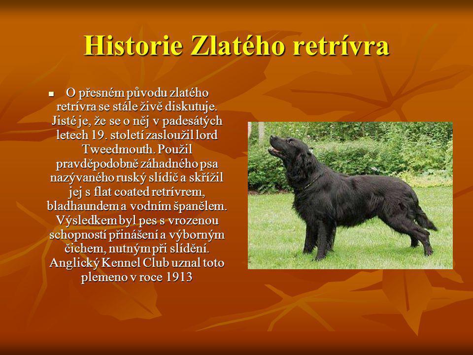 Popis Zlatého retrívra Zlatý retrívr je souměrný, vyvážený, aktivní, silný a iniciativní pes, s laskavým hlasem.