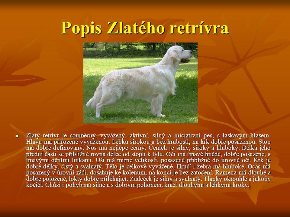 Popis Zlatého retrívra Zlatý retrívr je souměrný, vyvážený, aktivní, silný a iniciativní pes, s laskavým hlasem. Hlavu má přirozeně vyváženou. Lebku š
