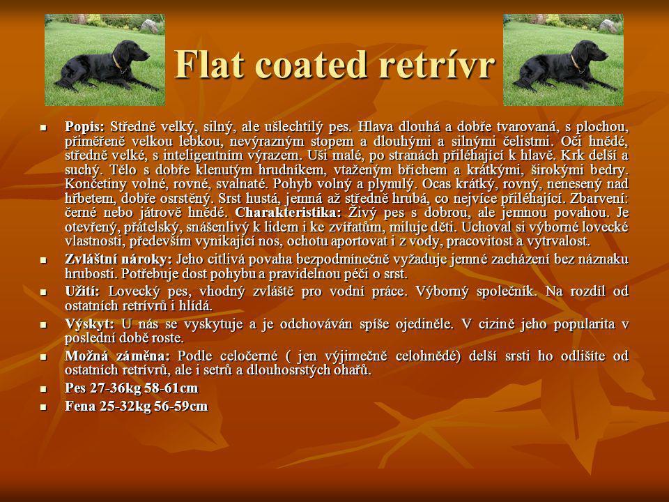 Flat coated retrívr Popis: Středně velký, silný, ale ušlechtilý pes. Hlava dlouhá a dobře tvarovaná, s plochou, přiměřeně velkou lebkou, nevýrazným st