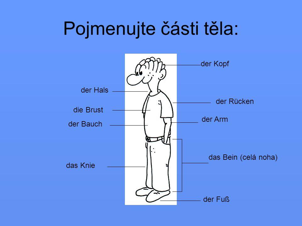 das Bein (celá noha) der Kopf der Bauch der Arm das Knie die Brust der Hals der Fuß der Rücken Pojmenujte části těla: