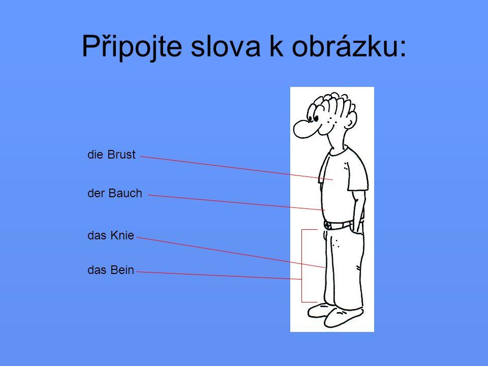 Rozdělte slova der Oberkörper (horní části těla) der Unterkörper (dolní části těla) das Bein der Kopf der Bauch der Arm das Knie die Brust der Hals der Fuß der Rücken