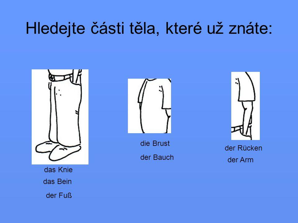 Hledejte části těla, které už znáte: das Bein das Knie der Fuß der Bauch die Brust der Rücken der Arm