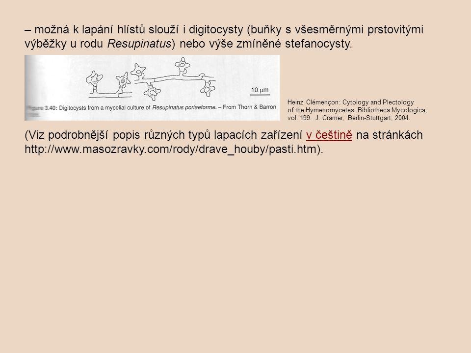 – možná k lapání hlístů slouží i digitocysty (buňky s všesměrnými prstovitými výběžky u rodu Resupinatus) nebo výše zmíněné stefanocysty. (Viz podrobn